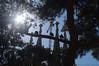 Sagrada Familia (Natali Antonovich) Tags: barcelona sunnybarcelona catalonia barcelonaspain spain architecture style antonigaudí mystiquegaudi church light faithhopelove tree birds religion mystery sagradafamilia art artnouveau