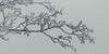 rauhreif 6706 (s.alt) Tags: frost detail frozen eiskristall icecrystal frozennature nature natureunveiled winter ice rauhreif cold kalt morgen kristallförmig vereist niederschlag hoarfrost whitefrost rime frostyrime silhouette macro minimalism minimal