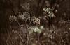 Einschlafplan, Nr. 358083: Morgen die Arbeitsschutzfortbildung sitzend in der kaputten Wiese verpassen, um sich vor Arbeit zu schützen. (Manuela Salzinger) Tags: winter abend evening güttingerseen sumpfgebiet marsh blume flower wiese meadow