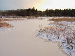Foxboro Cranberry Bogs 6 (dennisgg2002) Tags: foxboro massachusetts ma cranberry bogs winter new england snow landscapes