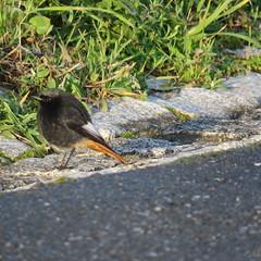 IMG_5218 (jesust793) Tags: pájaros birds naturaleza nature