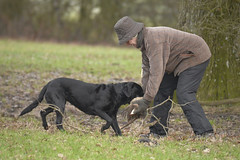 Redleaf Shoot — Dog Retrieveing (Kentish Plumber) Tags: redleafshoot pheasantshoot countrysidepersuits weald kent uk wellies tweed hats caps boots gun shotgun shoot woodland farmland 12gauge 12bore overandunder sidebyside workingdog gundog labrador spaniel