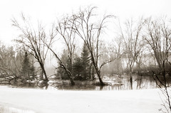 imagined sadness of winter (A. Wrench) Tags: snow ice water river stream landscape flood mist fog nature tree forest woods shore wisconsin winter north northwoods evergreens balsom hardwoods island