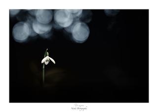 Un esprit ouvert au rêve