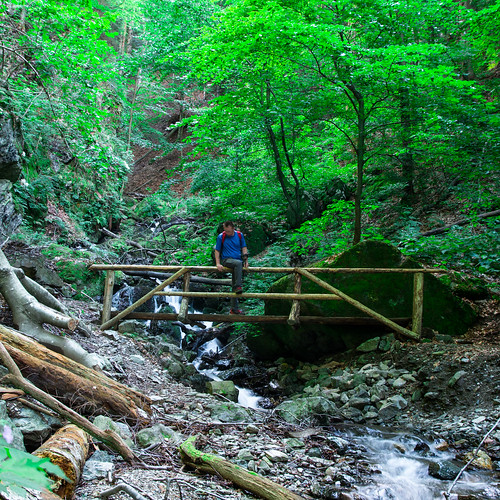 Pekre - Pečke trail