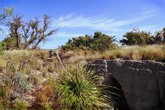 Chihuahuan Desert sinkhole (chasblount) Tags: statepark newmexico canon landscape flora desert carlsbad sinkhole livingdesert chihuahuandesert canoneos50d canonefs1018mmf4556isstm canonefs1018mm