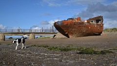 "The ""SS Boop"" (and guard dog :-), Instow beach (Aliy) Tags: instow devon northdevon boat ship rusty wreck rusting shipwreck oldboat oldship beach coast shore dog pier oldpier jetty oldjetty boop ssboop"