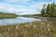 Femunden und Jmtland-462 (jo.hermann) Tags: nature norway landscape norge scenery schweden norwegen canoe mohawk sverige kanu spiegelung reflektion gatz paddeln femunden wollgras femund feragen
