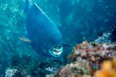 20150922-DSC_4689.jpg (d3_plus) Tags: sea sky fish beach japan scenery underwater diving snorkeling  shizuoka    apnea izu j4  waterproofcase    skindiving minamiizu       nikon1 hirizo  1030mm  nakagi 1  nikon1j4 1nikkorvr1030mmf3556pdzoom beachhirizo misakafishingport  1030mmpd nikonwpn3 wpn3