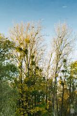 2015-11-01_Q8B3975 © Sylvain Collet.jpg (sylvain.collet) Tags: autumn france nature automne sur marne vairessurmarne vaires
