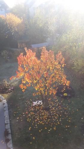 November Beats image