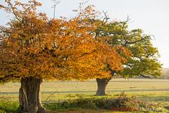 Hatfield_Forest-39 (Eldorino) Tags: park uk morning autumn trees nature forest sunrise landscape countryside nikon britain centre jour hatfield bishops stortford essex hertfordshire stanstead hatfieldforest