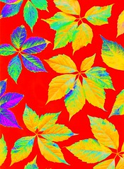 56948.13 Parthenocissus quinquefolia (horticultural art) Tags: leaves pattern psychedelic virginiacreeper parthenocissus parthenocissusquinquefolia horticulturalart