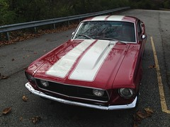 "1968 Mustang • <a style=""font-size:0.8em;"" href=""http://www.flickr.com/photos/85572005@N00/23028399423/"" target=""_blank"">View on Flickr</a>"