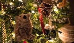 Merry Christmas (Navasj7) Tags: bear puertorico christmastree merrychristmas feliznavidad canon1740mml sonya7s