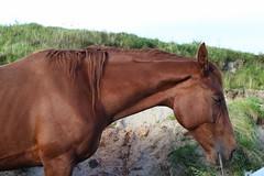 Horse (emermartyn1) Tags: horse beach emotion sad