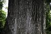 Jequitibá (Gabriel Castaldini) Tags: árvore tree huge parque park ecologia bioma nature natureza naturelovers mataatlântica cerrado floresta jungle arbre ecologie green verde preservação meioambiente environment environnement développementdurable desenvolvimentosustentável sustentável sustainability natura naturaleza medioambiente sostenibilidad vassununga sp santarita santaritadopassaquatro interior sãopaulo rodoviaangangüera tronco