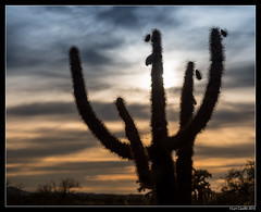 "cacti sunset • <a style=""font-size:0.8em;"" href=""http://www.flickr.com/photos/19658346@N02/31146991714/"" target=""_blank"">View on Flickr</a>"