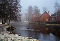 Ducks In Cold Water (bjorbrei) Tags: water river stream shore frost cold winter grass trees brick oldbuildings oldhouses ducks mist misty akerselva frysja kjelsås oslo norway