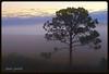 IMG_8456_Finally I got there. (lada/photo) Tags: morninglight lonetree fog dawn florida ladaphoto