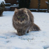 Very funny .... and where is the lawn ? (FocusPocus Photography) Tags: fynn fynnegan katze kater cat chat gato tier animal haustier pet schnee snake winter