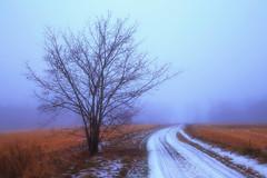 Lonely road (Olli Tasso) Tags: fog tree road snow ice field hay grass winter evening landscape minimalistic scenery rural countryside suomi finland sumu usva tie lumi pelto talvi ilta maisema maalaismaisema longexposure puu lonely solitary calm peaceful lempäälä jää pitkävalotus heinä joulukuu december