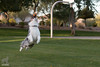 If dogs could fly (Jasper's Human) Tags: australianshepherd aussie chuckit run fly leap