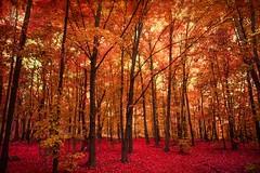 Stuck in St. Louis (Thomas Hawk) Tags: autumn fall missouri stlouis usa unitedstates unitedstatesofamerica tree trees fav10 fav25 fav50 fav100