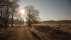 The road to ... (Alex Verweij) Tags: bikbergen huizen heide road weg sfeer serene alexverweij canon 24mm 5d