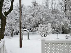 ** C'est l'hiver...** (Impatience_1 ( Peu...ou moins présente... )) Tags: cour yard courtyard hiver winter snow neige arbre tree m impatience saveearth supershot coth wow coth5 abigfave alittlebeauty paysage landscape sunrays5 fantasticnature