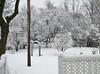 ** C'est l'hiver...** (Impatience_1 ( Peu...ou moins présente... )) Tags: cour yard courtyard hiver winter snow neige arbre tree m impatience saveearth supershot coth wow coth5 abigfave alittlebeauty paysage landscape