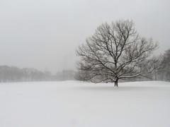Snow Day #7 (Keith Michael NYC (2 Million+ Views)) Tags: centralpark manhattan newyorkcity newyork ny nyc