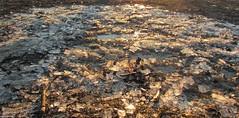 Croccante (PennadiFata.it) Tags: ghiaccio inverno winter sun sole sunset
