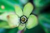 Bromélia (Johnny Photofucker) Tags: bromélia lightroom planta plant pianta verde green flora macro 60mm vegetação vegetal