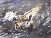Duck Fight - Original Watercolour Bird Painting by Steve Greaves (Steve Greaves) Tags: bird art artwork paint painting watercolour paper brush sable wildlife nature naturalhistory water fight fighting scrap scrapping mallard drake aylesbury white brown mauve grey canal splash ripple contemporary action drama dramatic animal ornithology