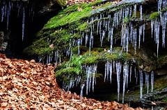Equilibri precari (encantadissima) Tags: campocecina alpiapuane toscana sottobosco sentieri massacarrara stalattiti muschio foglie