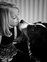 Love is wet noses, sloppy kisses and swagging tails (heidikesteloot) Tags: loeka mextures blackandwhite blackandwhitephotography photography portrait people child girl daughter dog bernersennen