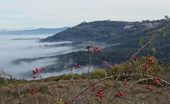 Dietro le spine delle rose canine - Behind the thorns of dog-roses (Jambo Jambo) Tags: rosacanina dogrose nebbia fog buonconvento siena toscana tuscany italia italy panorama landscape hills cretesenesi campagna countryside jambojambo colline collinesenesi collinetoscane tuscanhills montalcino sonydscrx100