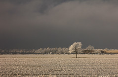 Glorious ((( n a t y ))) Tags: winter ice icy frost frosty frozen freezing cold season january canon tree road rijp hielo invierno sun sunny cloudy misty weather white netherlands holland friesland fryslan ourdoor nature countryside morning beautiful golden light dof amazing isolated minimalist minimalism
