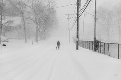 A walk in the snowstorm (WilliamND4) Tags: hff fencefriday snow nikon d810 blackandwhite