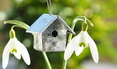For the Birds [Explored Mar 13, 2017] (G_E_R_D) Tags: macromondays madeofmetal birds birdhouse snowdrops vögel vogelhaus schneeglöckchen spring frühling