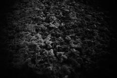 the ocean foam (bendikjohan) Tags: ocean sea bw white black film nature water norway blw september shore foam bnw bl