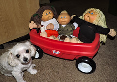 Bella Wishes The Cabbage Patch Kids Would Invite Her To Their Party (marilyntunaitis) Tags: party wagon bella cabbagepatchkids dogchal dailydogchallengeobjectofdesire