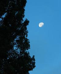 Early morning moon (MauiMikey2) Tags: sky washington bankslake devilspunchbowl steamboatrock