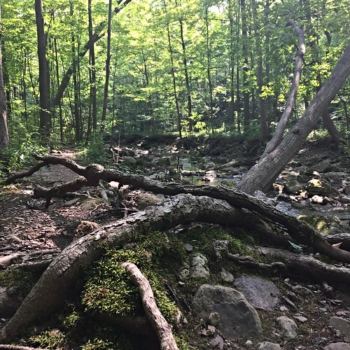 Randonnées Bruce Trail