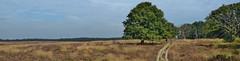 Deelerwoud (henkmulder887) Tags: panorama nature landscape nikon arnhem natur natuur natura hoge veluwe apeldoorn natuurmonumenten deelerwoud edelhert bronsttijd edelherten