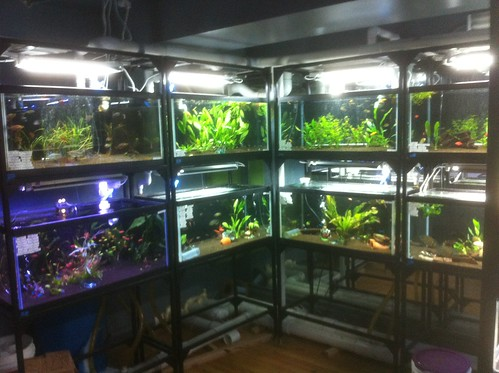 Custom Fish Systems - Fish Store - NYC - 7