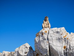 on the lookout (toddvic) Tags: money rock gibraltar