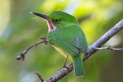 San Pedrito (horaciovel) Tags: birds canon puertorico sigma pr sanpedrito guayanilla