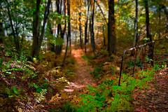 La forêt enchantée 2 / Enchanted forest 2 (Siolas Photography) Tags: wood autumn colors automne couleurs québec fujifilm leafs extérieur forêt feuilles xe2 mpdquebec francequébec
